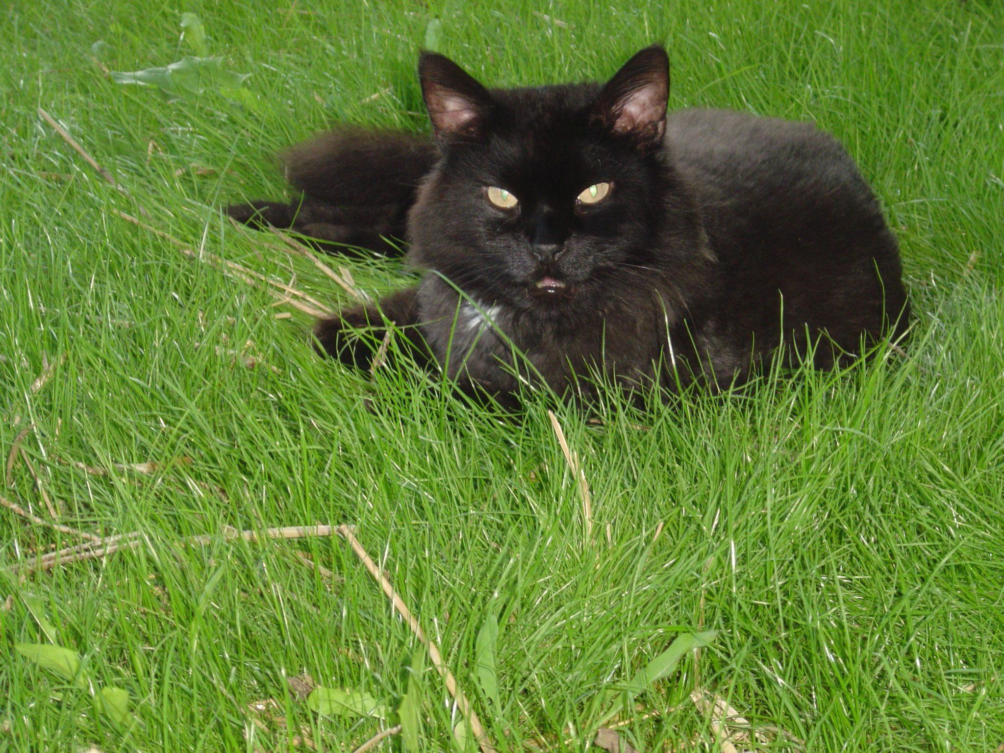 Tammany a.k.a. Putter Cat